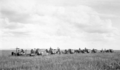 Queensland State Archives 4150 Harvesting scene on Zeisemer Brothers Bongeen November 1934.png