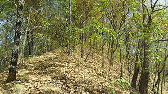 Quercus glaucoides - Image: Quercus glaucoides