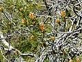 Réserve Naturelle du Lez (2396765093).jpg