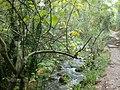 Río El Bosque.JPG