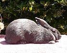 RabbitAmericanBlue.jpg