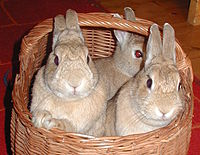 Rabbits 3 Jun 2003.jpg