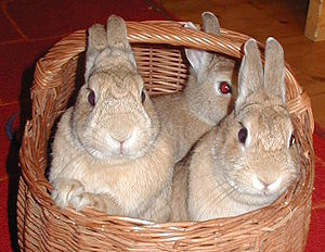 Rabbits 3 Jun 2003