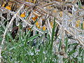 Raindrops frozen on grass.JPG