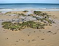 Receding tide at East Runton beach - geograph.org.uk - 1479140.jpg