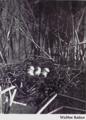 Reed-horned-grebe-nest.png