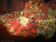 Reef Stonefish.jpg