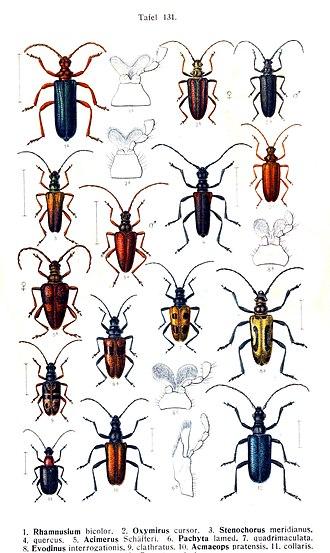 Edmund Reitter - Image: Reitter 1912 bugs 3131