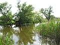 Rhin bei Strodehne 29-05-2010 7612.jpg