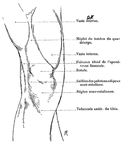 masse musculaire homme