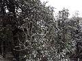 Rishikesh haridwsurkanda deviar (255).JPG