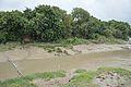 River Saraswati - Sankrail - Howrah - 2013-08-11 1382.JPG