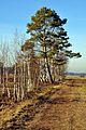 Robenhauser Riet 2012-01-18 14-56-12.JPG