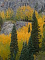 Rocky Mountain National Park in September 2011 - Aspen in shade near Bear Lake.JPG
