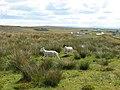 Rough grazing near Garrabost - geograph.org.uk - 495273.jpg