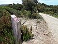 Route charretière dite romaine de Montauriol.jpg
