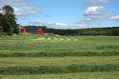 Rows of grass in a field at Gåseberga.jpg