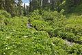 Ruf Ciavazes Selva Gherdeina plu insu.jpg