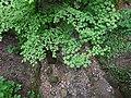 Ruisseau de Loverchy @ Parc du Val Vert @ Seynod (50884776566).jpg