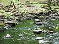 Söderåsen landscape swamp river.jpg