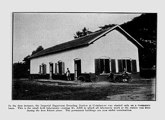 Coimbatore - The Sugarcane Breeding Institute at Coimbatore, 1928