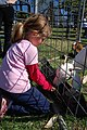 SK Petting the goats (5136655801).jpg