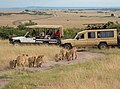 Safari in The Maasai Mara (43837384641).jpg