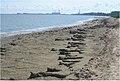 Saginaw Bay shoreline muck. Bay City Park (8740856877).jpg
