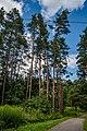 Sakaliny local biological reserve p07.jpg