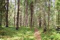 Sallaajärvi nature trail3.jpg