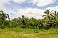 Samaná Province, Dominican Republic - panoramio (165).jpg