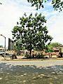 Sao Tome 39 (16061440908).jpg
