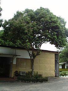 Tonkabohnenbaum Wikipedia