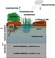 Schematic-representation-of-peatland-structure-and-function-in-the-implementation-described-in-this-paper.jpg