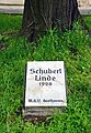 Schubertlinde.jpg