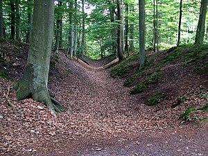 Schwedenschanze - A Schwedenschanze in Lübeck Forest, Lauerholz