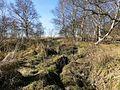 Schwimmendes Moor, bei Sehestedt, Jadebusen (3).jpg