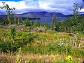 Scotland Changes The Forest - panoramio.jpg