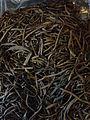 Sea Spaghetti seaweed.jpg