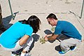 Seabeach Amaranth (Amaranthus pumilus) federally threatened (9501058265).jpg