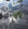 Sebangau River 10.jpg