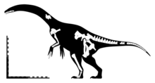 Segnosaurus skeletal.png