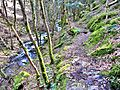 Sentier d'accès à la cascade de l'Erzenbach.jpg