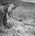 Serie Landmijnen ruimen in Hoek van Holland, Bestanddeelnr 900-6465.jpg