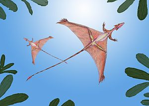 Sharovipteryx, Lebendrekonstruktion