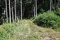 Siebengemeindewald (14) Weg.jpg