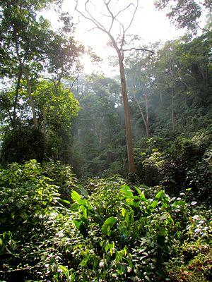 Sierra de Perijá National Park - Forested area