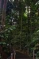 Singapore Botanic Gardens (4042376577).jpg
