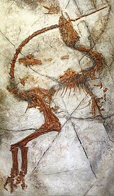 Fossil von Sinosauropteryx aus der frühen Kreidezeit von Ost-Asien mit Erhaltung von Federn