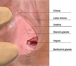nais suku puoli orgasmeja ajeltu pillu ja hanat